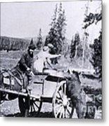 Feeding Bear Yellowstone National Park Metal Print