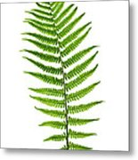 Fern Leaf Metal Print by Elena Elisseeva