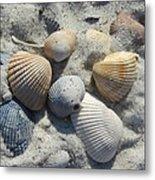 Fernandina Shells  Metal Print
