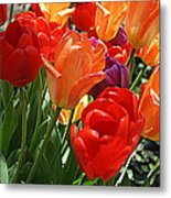 Festival Of Tulips Metal Print