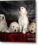 Festive Puppies Metal Print