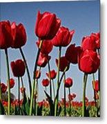 Field Of Red Tulips Metal Print