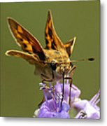 Fiery Skipper Butterfly Metal Print