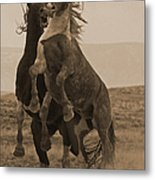 Fighting Wild Stallions Metal Print