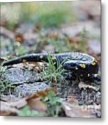 Fire Salamander Fog Droplets Metal Print