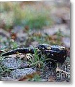 Fire Salamander Metal Print