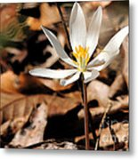 First Sign Of Spring 2 Metal Print