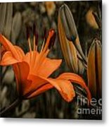 First To Bloom Metal Print