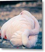 Flamingo 2b Metal Print