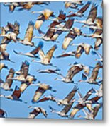 Flight Of The Sandhill Cranes Metal Print by Steven Llorca