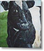 Flirtatious Cow Metal Print