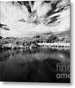 Flooded Grasslands And Mangrove Forest In The Florida Everglades Usa Metal Print