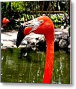 Florida Pink Flamingo Metal Print