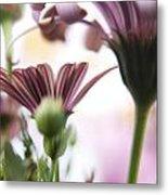 Flower Background Metal Print
