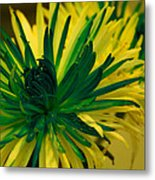 Flower Metal Print by Jennifer Burley