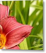 Flower Lily Background Metal Print