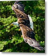 Flying Eagle Metal Print