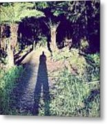 Forest Shadow Metal Print by Les Cunliffe
