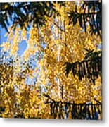 Forest Tale - Featured 3 Metal Print