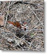 Fox Sparrow Metal Print