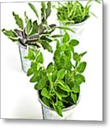 Fresh Herbs In Pots Metal Print