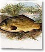 Fresh Water Fish Metal Print
