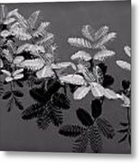 Frilly Metal Print
