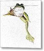 Frog On Waterline Metal Print