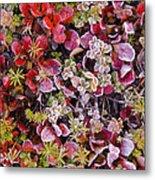 Frost On Autumn Tundra Metal Print