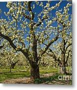 Fruit Orchard Metal Print