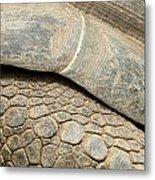 Galapagos Turtle Metal Print