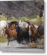 Gaucho With Herd Of Horses Metal Print