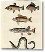 German Sea Fish Metal Print