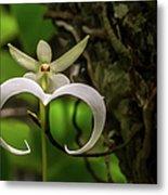 Ghost Orchid Metal Print