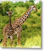 Mom Giraffe And Little Joey Metal Print