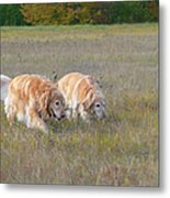 Golden Retriever Dogs On The Hunt Metal Print