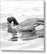 Goose In The Water Metal Print