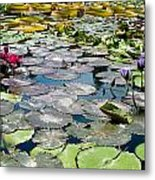 Gorgeous Water Lilies Metal Print