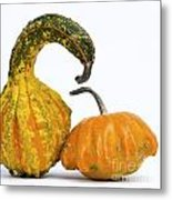 Gourds And Pumpkins Metal Print