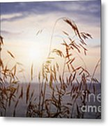 Grass At Sunset Metal Print