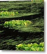 Grasses And Lilies In Beaver Pond Metal Print