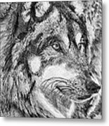 Gray Wolf Watches And Waits Metal Print
