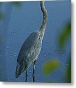 Great Blue Heron I Metal Print