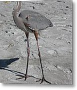 Great Blue Heron On The Beach Metal Print
