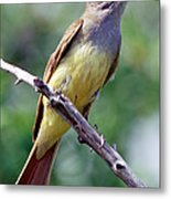 Great Crested Flycatcher With Captured Metal Print