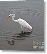 Great Egret Ardea Alba Metal Print