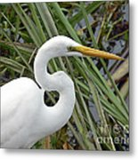 Great Egret Close Up Metal Print