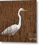 1- Great Egret Metal Print