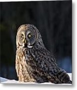 Great Gray Owl Pictures 789 Metal Print