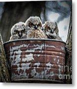Great Horned Owl Chicks Metal Print